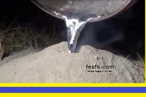 بالفيديو .. شيء لا يمكن توقعه ! عندما يتم صب المونيوم مصهور في بيت النمل !
