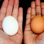 هل يجب غسل البيض قبل سلقه ؟