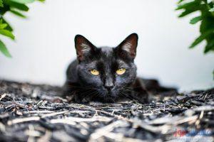 صور مميزة، هل شاهدت الوش الثاني للقطط ؟