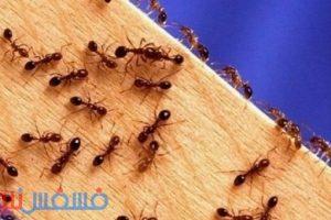 وصفة سحرية تمنع النمل من دخول منزلك لأطول فترة ممكنة