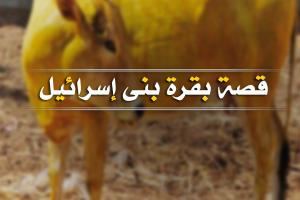"""سلسلة قصص القرآن الكريم """" قصة بقرة بني إسرائيل """""""