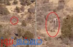 فيديو.. مخلوق غريب يتجول في صحراء دولة البرتغال