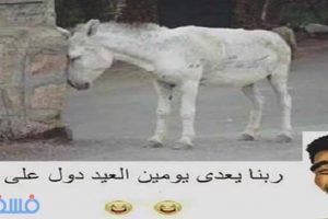 قفشات عيد الأضحى تعليقات مصورة عن عيد الأضحى للفيس بوك 2016