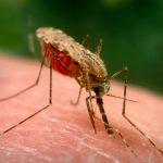 وفاة مريض ملاريا أسوان