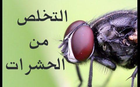 طرق التخلص من الحشرات المنزلية بكل سهولة