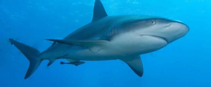 الحقيقة الكاملة وراء ظهور أسماك القرش بشواطئ البحر الأحمر
