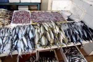 أسعار الأسماك تشهد استقراراً و زيادة ١٠٠ جنية في أسعار الجمبري