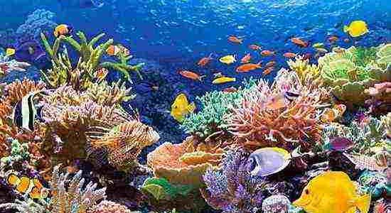تعرف على أجمل الشواطئ السياحية في مصر