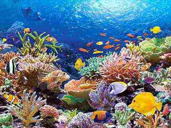 أجمل الشواطئ المصرية