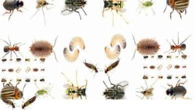 Photo of طريقة مكافحة جميع انواع الحشرات بطرقة طبيعية وبسهولة